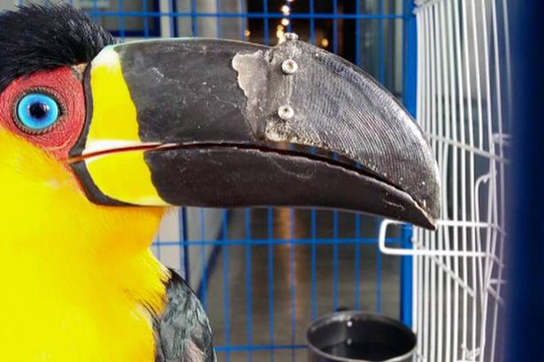 3D printed prosthetic helps tropical toucan